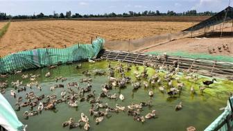 An Giang: Chăn nuôi tiếp tục phát triển