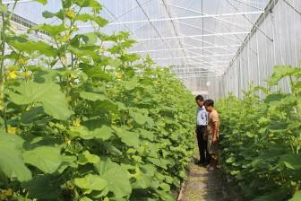 TX. Tân Châu xây dựng hệ thống giao thông thủy lợi nội đồng, phục vụ tái cơ cấu nông nghiệp
