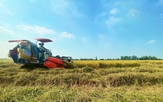 An Giang: 20% diện tích lúa vụ đông xuân được liên kết tiêu thụ