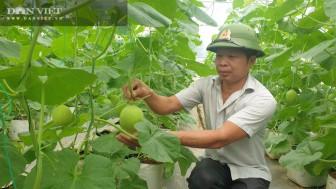 Thanh Hóa: Trồng dưa lưới công nghệ cao, vườn đẹp như phim, một ông nông dân thành tỷ phú