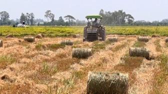 Nhạy bén trong làm ăn, nông dân thêm thu nhập