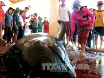 Cá voi nặng 300 kg dạt vào bờ biển Tuy Hòa