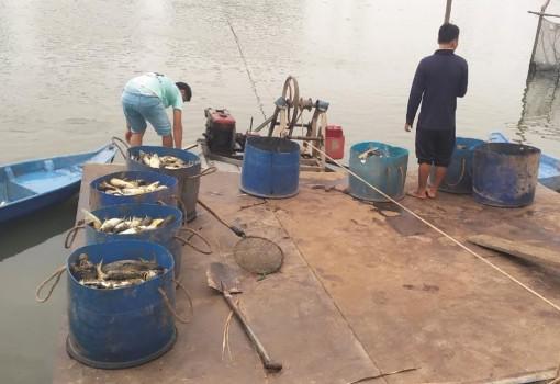 An Giang: Nhiều ao cá tra cặp sông Hậu bị vỡ