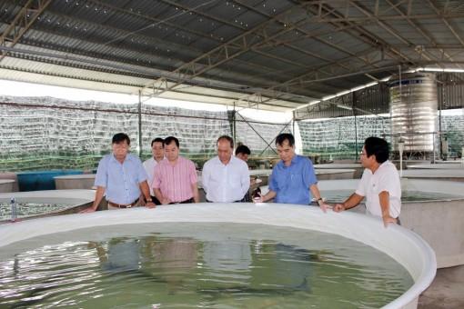 An Giang tập trung nâng cao chất lượng cá giống