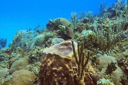 Biến đổi khí hậu làm suy giảm sự đa dạng của sinh vật biển gần xích đạo