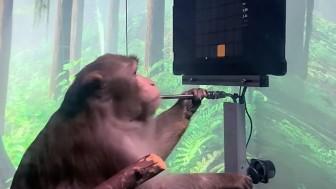 Khỉ cấy chip não chơi trò chơi điện tử