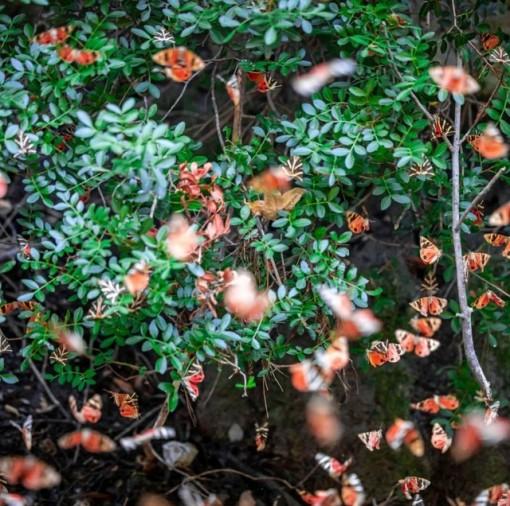 """Sửng sốt vẻ đẹp """"siêu thực"""" của thung lũng bươm bướm ở Hy Lạp"""