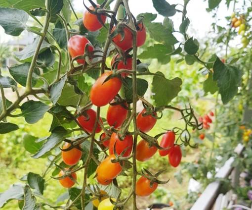 An Giang hỗ trợ phát triển nông nghiệp ứng dụng công nghệ cao