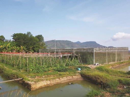 An Giang: Sáng tạo giúp hộ Khmer thoát nghèo