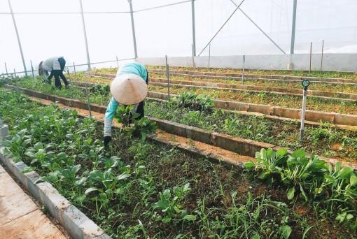 """Việt Nam xuất khẩu 4 tỷ USD rau quả, đã đến lúc cần hình thành sản xuất """"có trách nhiệm"""" để vươn tầm thế giới"""