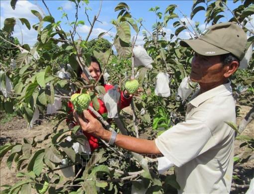 Chuyển đổi cơ cấu cây trồng tăng hiệu quả kinh tế