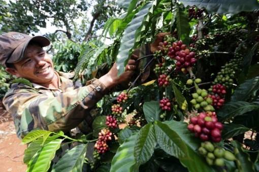 """""""Xanh"""" hơn - hướng phát triển tất yếu của sản xuất nông sản xuất khẩu"""