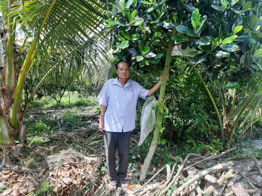 Nông dân Thoại Sơn tích cực chuyển đổi cây trồng