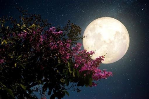 Đêm nay và mai, Việt Nam chiêm ngưỡng 'siêu trăng hồng' kỳ ảo
