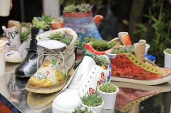 Tái chế giày cũ thành những chậu cây thân thiện với môi trường