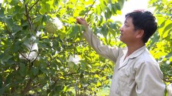 Phú Tân qua 2 năm thực hiện chuyển đổi cơ cấu cây trồng