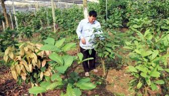 Vĩnh Phúc: Lên núi tìm loài cây quý mang về trồng trong vườn, bất ngờ hái thứ hoa bán đắt như vàng