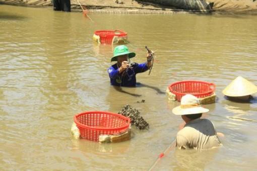 """Qua Hòa Minh gạn tôm, bắt cua, """"say mồi"""" cá ngát"""