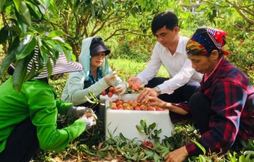 Thúc đẩy tiêu thụ nông sản trong mùa dịch Covid-19