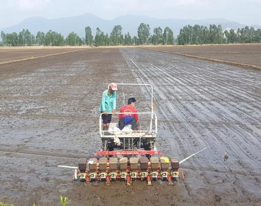 Hiệu quả dự án ứng dụng thiết bị gieo hạt lúa theo cụm