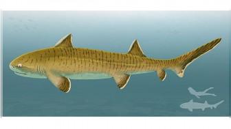 Hóa thạch quý hiếm chưa từng có của loài cá mập 150 triệu năm tuổi