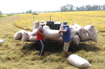 Tân Châu gặp nhiều khó khăn trong phát triển mới hợp tác xã nông nghiệp
