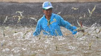 """Hết """"ngủ đông"""", Mỹ, EU mở cửa nhiều hoạt động, một loại nông sản của Việt Nam hưởng lợi lớn chưa từng có"""