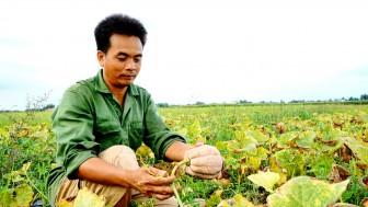 """Đồng Nai: Trồng thứ quả mệnh danh là """"nhà vô địch dinh dưỡng"""", nông dân chỉ lấy hạt đem bán mà kiếm bộn tiền"""