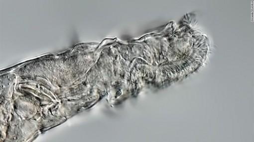 Hồi sinh loài vật bị đóng băng 24.000 năm ở Bắc Cực