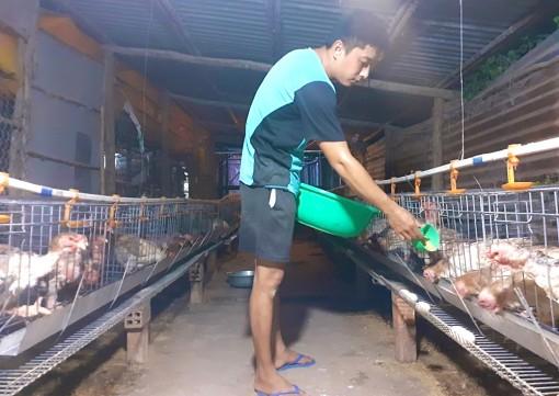 Mô hình nuôi gà đông tảo khép kín