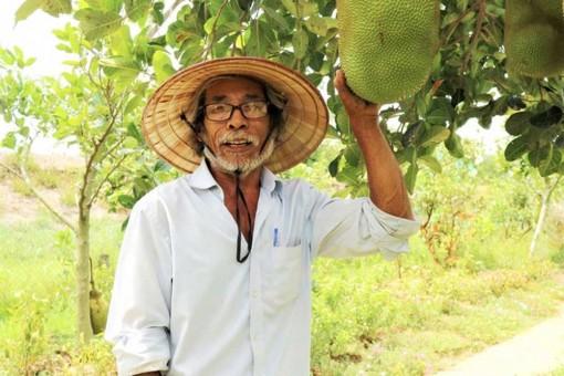 Quảng Nam: Một ông nông dân trồng vườn 10 loại cây đặc sản, trong đó có quả bưởi to như quả mít nặng 5kg
