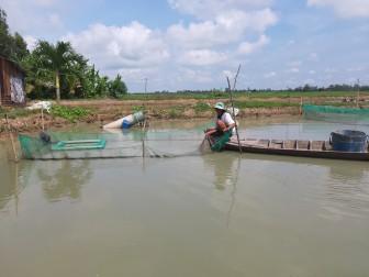 Hiệu quả nuôi cá chạch lấu trong ao đất