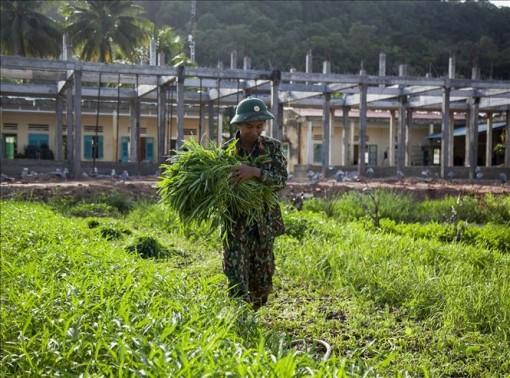 Mảng xanh trên vùng biển đảo Tây Nam của Tổ quốc