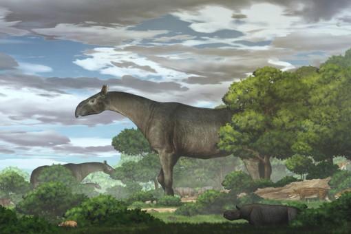 """Kinh hãi tê giác """"quái thú"""" 26,5 triệu tuổi giống khủng long, gấp 4 lần voi"""