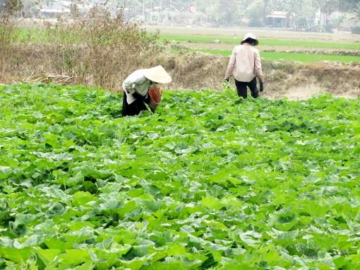 Giá nhiều mặt hàng nông sản giảm do dịch bệnh