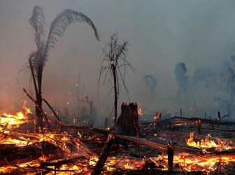 Cháy rừng, hạn hán khiến bệnh nhân COVID-19 ở Brazil càng khó hồi phục