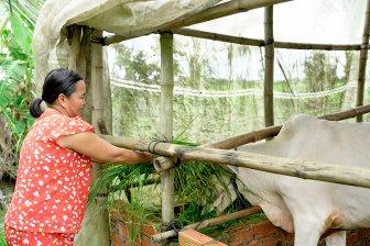 Hiệu quả từ nguồn vốn tín dụng chính sách ở Phú Tân