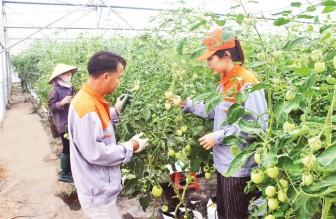 Bắc Ninh đẩy mạnh ứng dụng công nghệ cao vào sản xuất nông nghiệp