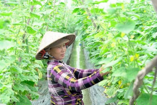 Xã vùng sâu Vĩnh Nhuận chuyển đổi cơ cấu cây trồng
