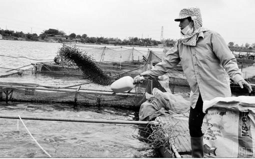 Bắc Ninh đẩy mạnh nuôi trồng thủy sản áp dụng VietGAP