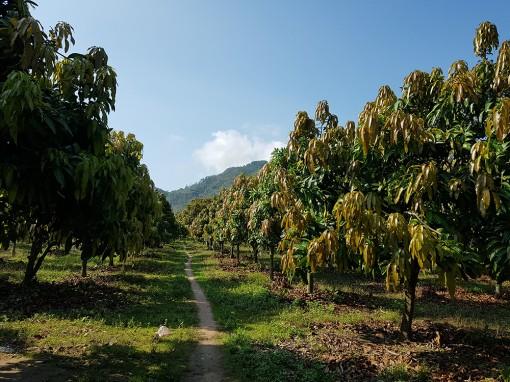 Tri Tôn phát triển được 22 hợp tác xã nông nghiệp