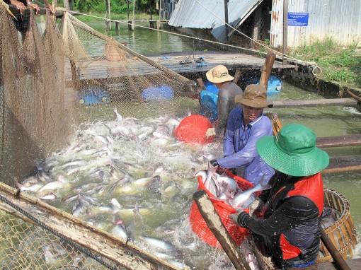 Thời điểm thích hợp để sắp xếp lại ngành hàng cá tra