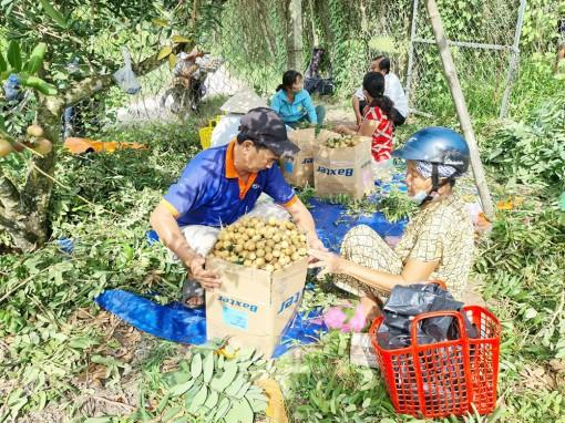 Hỗ trợ tiêu thụ nhãn xuồng Khánh Hòa