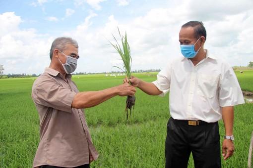 Nông dân Tân Châu chủ động ứng phó với giá phân bón tăng cao
