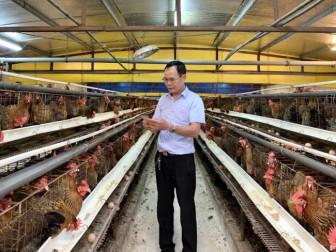 Một ông nông dân Thủ đô nuôi gà kiểu nhàn tênh, xuất 45 vạn con giống, thu 4,5 tỷ đồng/năm