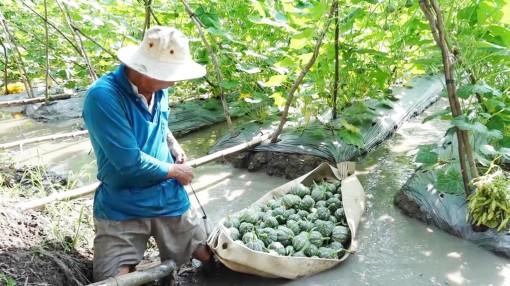 Thoại Sơn kiện toàn hợp tác xã nông nghiệp