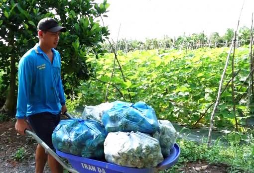 Vĩnh Chánh hướng đến sản xuất và liên kết tiêu thụ rau màu