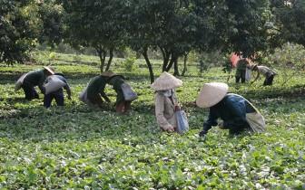 Bắc Kạn khai thác lợi thế, phát triển nông lâm nghiệp