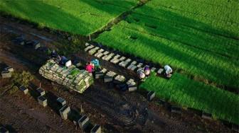 Việt Nam đạt hai bằng danh dự tại cuộc thi nhiếp ảnh FIAP năm 2021