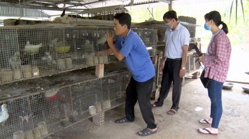 Mô hình nuôi chim bồ câu gà và trồng mít Thái